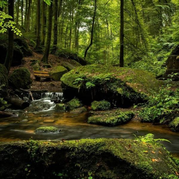 Seis medidas para proteger bosques del cambio climático