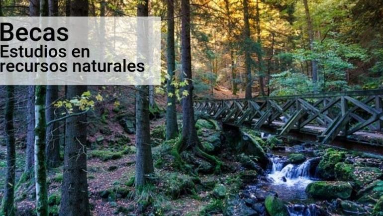 Becas cursos cortos en ciencias forestales o dirección de capital naturales