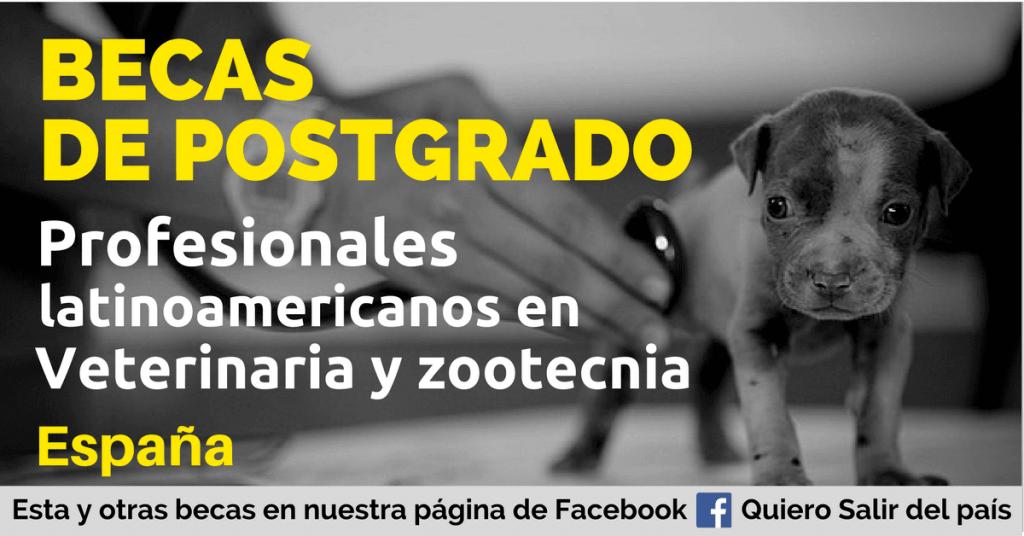 Becas para profesionales en veterinaria y zootecnia en España