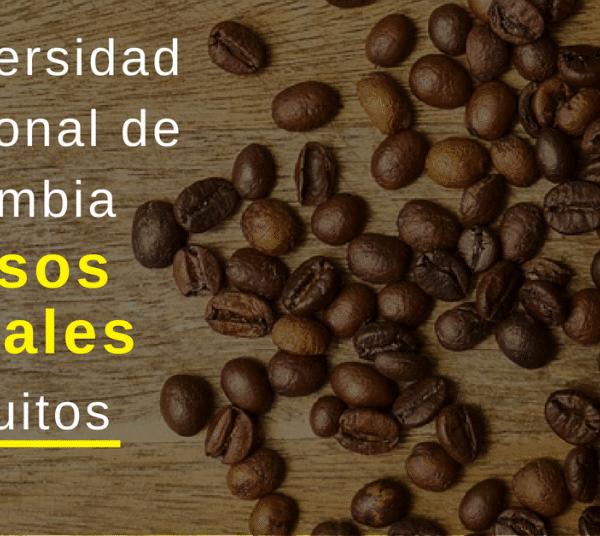 Cursos virtuales y gratuitos Universidad Doméstico de Colombia – UNAL